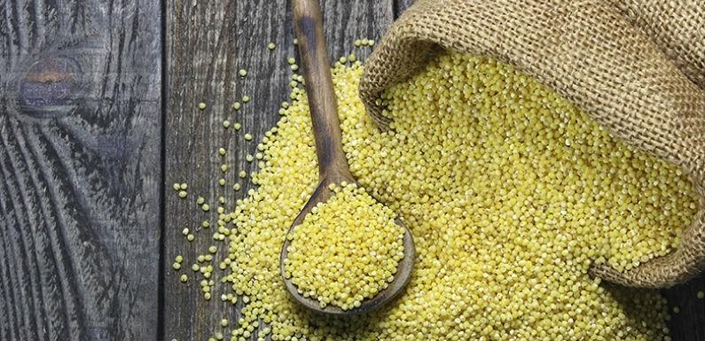 Semillas de mijo y permanganato de potasio