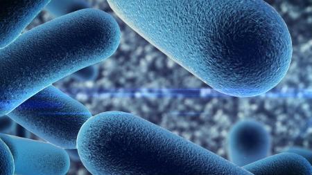 Conoce las bacterias que benefician a tu salud