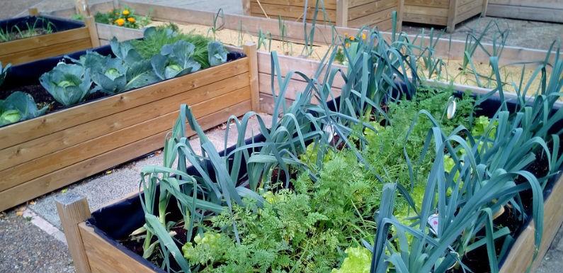 Que plantar en el huerto en Primavera y Verano