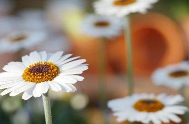 Regalar flores frescas