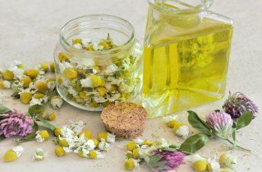 plantas medicinales para tener siempre cerca