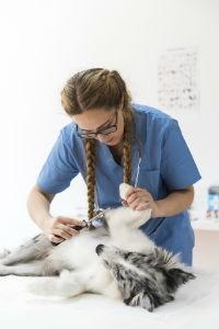 Salud de las mascotas