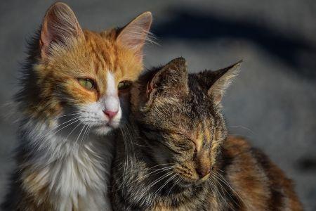 Hospedaje de mascotas