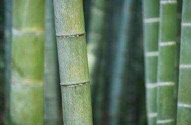 Bambú alternativa ecológica para decorar